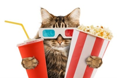 cat with 3D glasses soda and popcorn