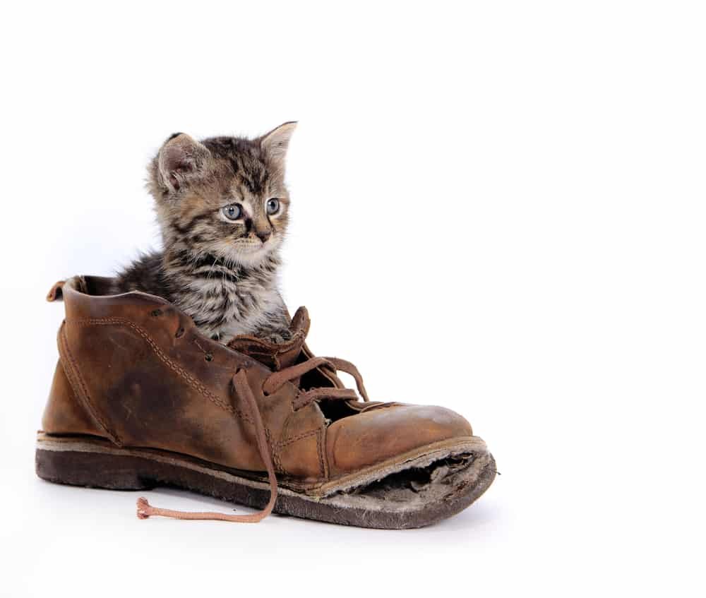 Dude, I need to buy some cashews! - Your cat wears shoes? - Hot UK