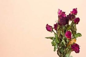 wilted-roses