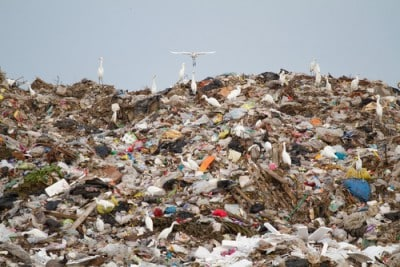 dumpingground