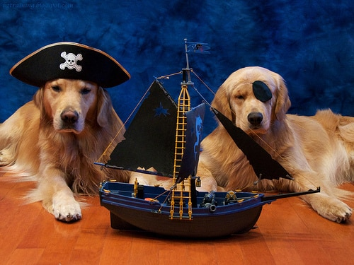 captain dogs