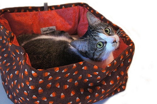 candy corn bed cat