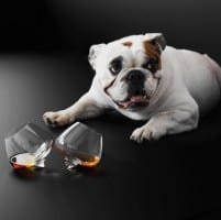 Normann_Copenhagen_Cognac_Glasses_with_dog_grande