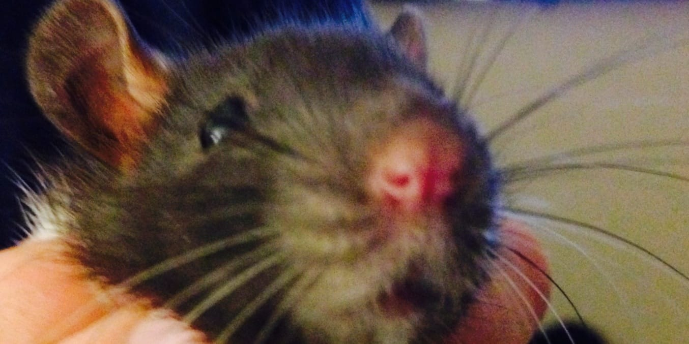 people who get their kids pet rats are absurd including me
