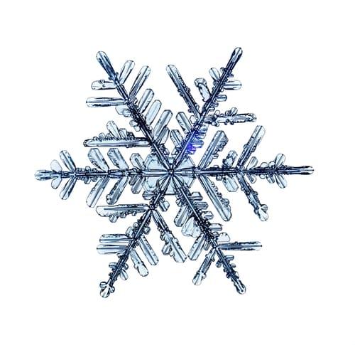 special-snowflake-kids