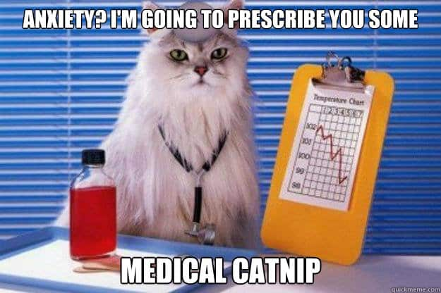 cat doctor meme medical catnip