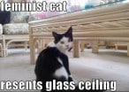 9 Reasons Why Women Can't Have It All...But Cats Totally Can