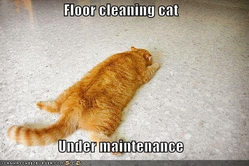 floor cleaning cat