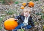 Expectations Vs. Reality: Pumpkin Picking With Young Kids