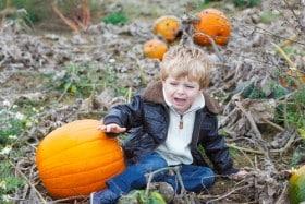 pumpkin crying