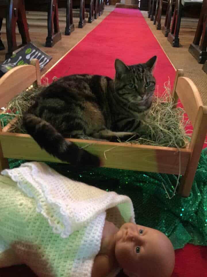 church cat in manger