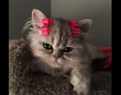 girlie-glue-cat