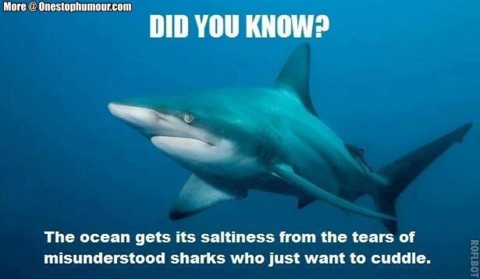 shark week 2017 1 shark week 2017 a collection of the funniest memes