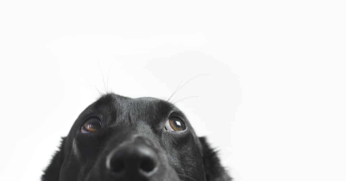 anti-vax-dog