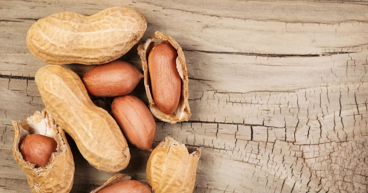 Australian researchers may have found cure to dreaded peanut allergy