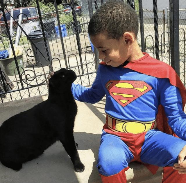 superhero cat rescue