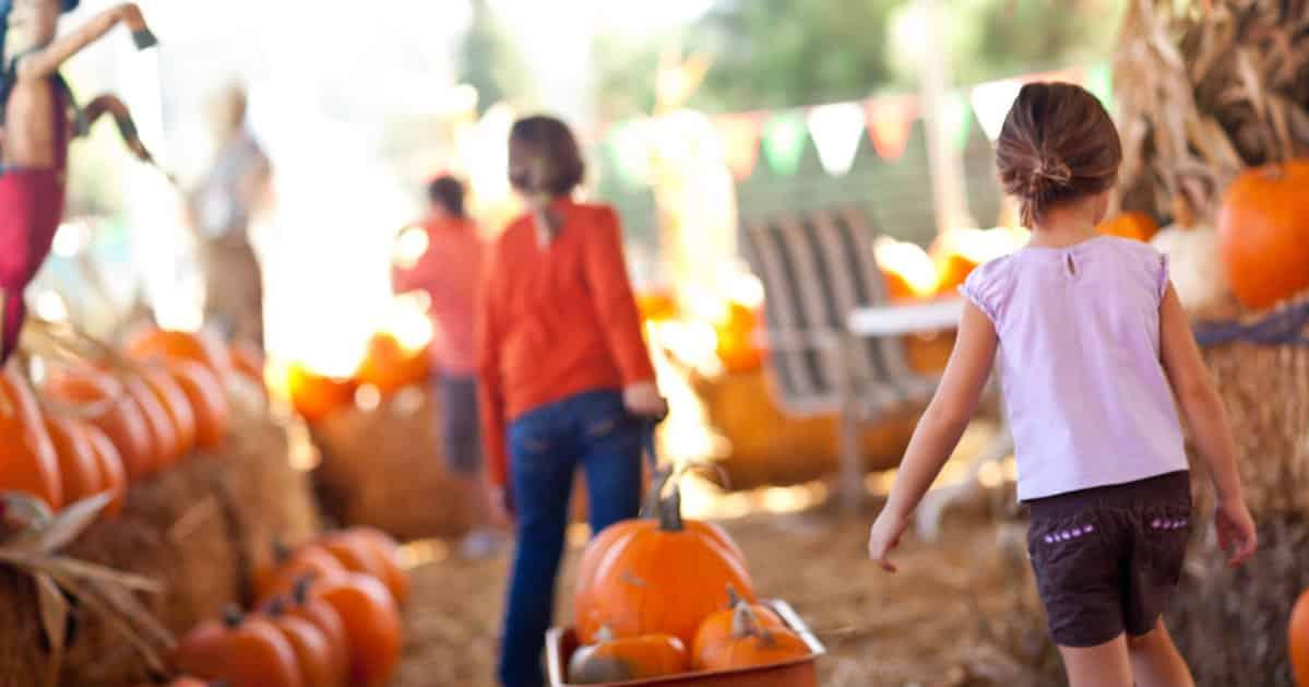 pumpkin patch ticks