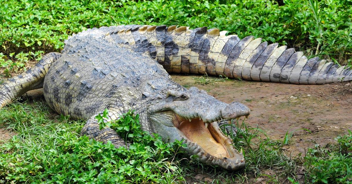 kids swim with crocodiles