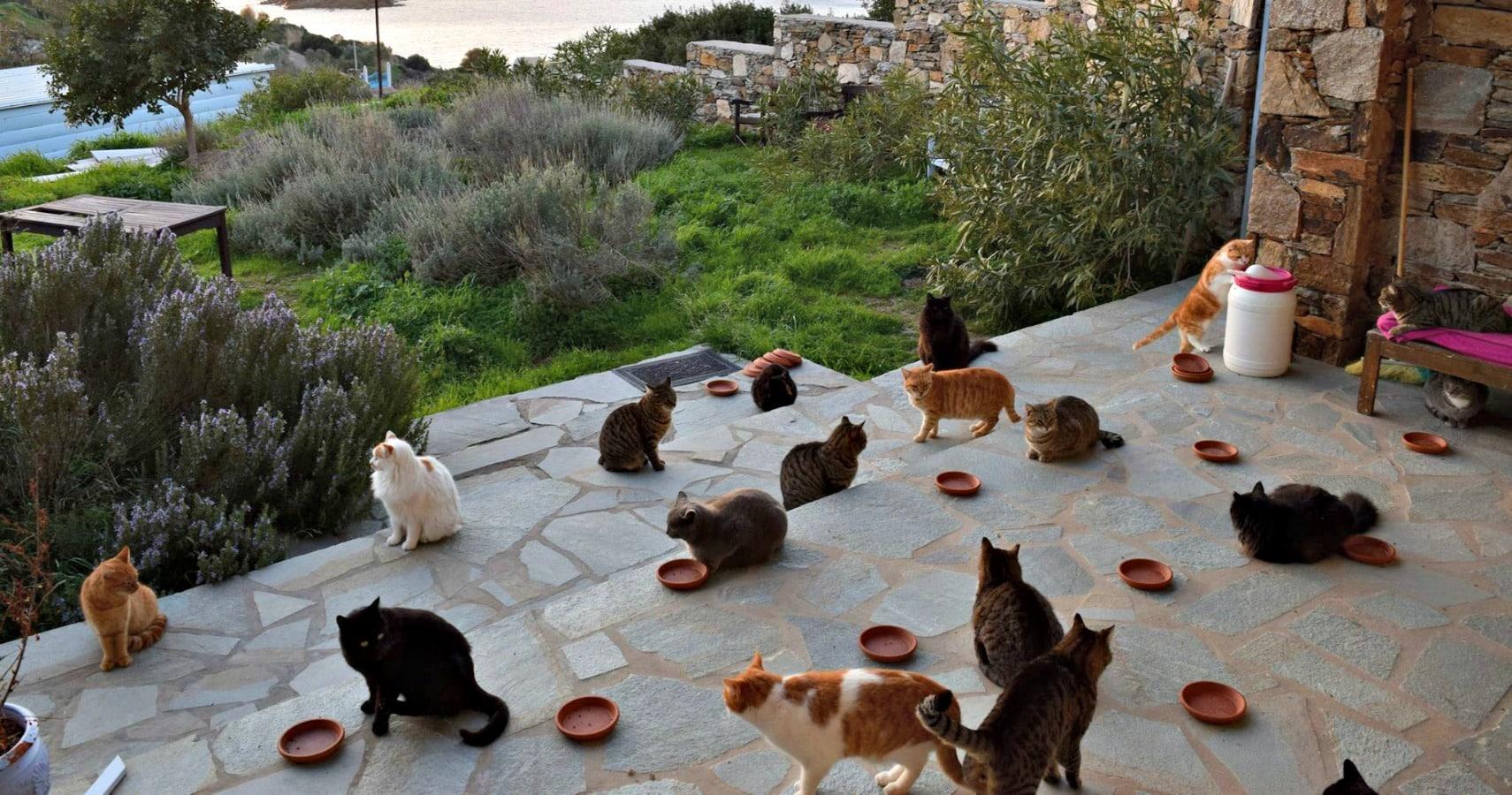 God's Little People Cat Rescue)