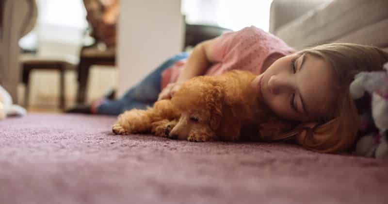 rehoming your pet