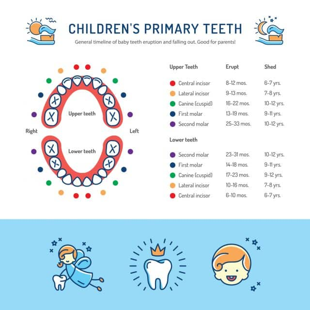 a guide to baby teeth