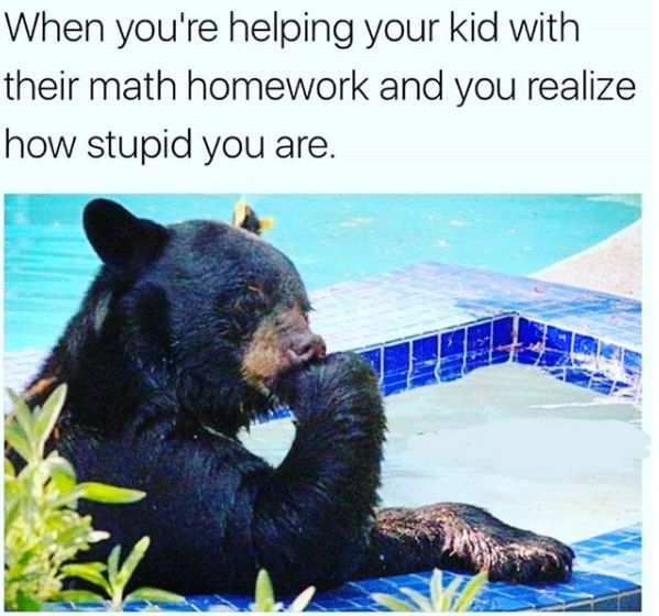 Bear, Math, Me As A Parent