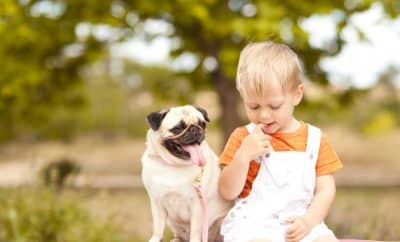 boy and pug dog