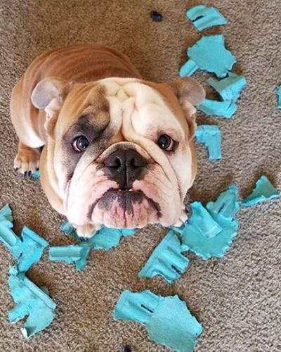 Regretful dog