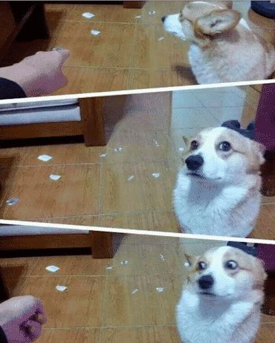 Shocked Dog meme