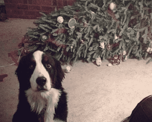Guilty Dog Grinch Christmas