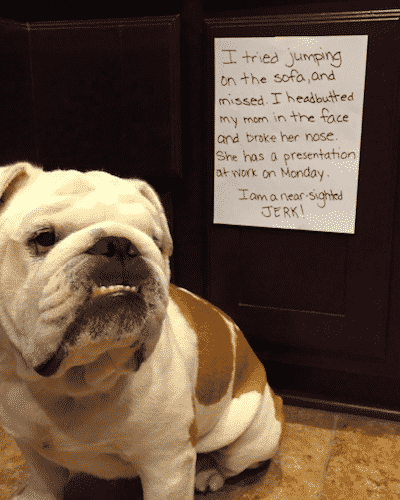 Guilty Dog Confessions