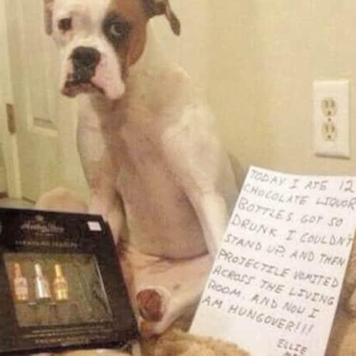 Drunk Dog Photo